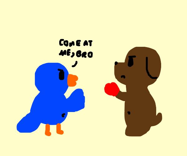haha birb vs doge