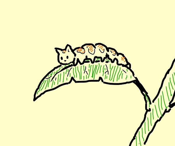 Cat-erpillar on a leaf