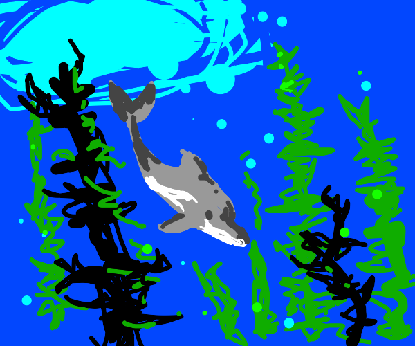 dolphin and kelp
