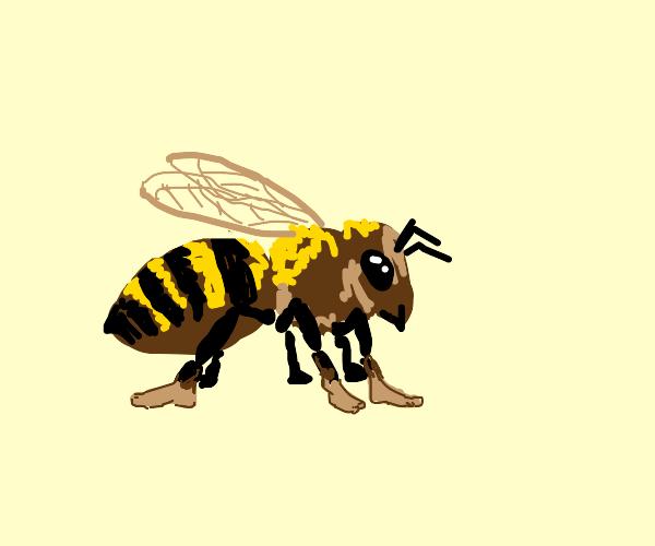Bee with human feet