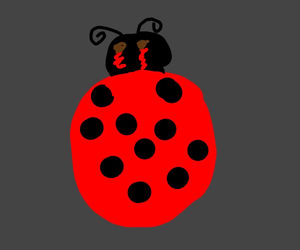 Nightmare Ladybug