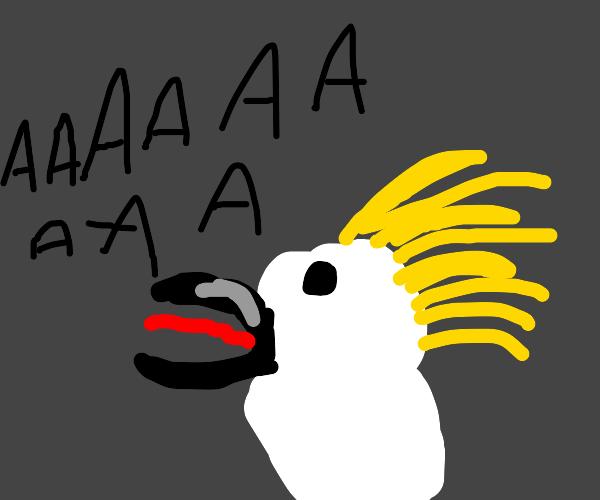 screaming cockatoo