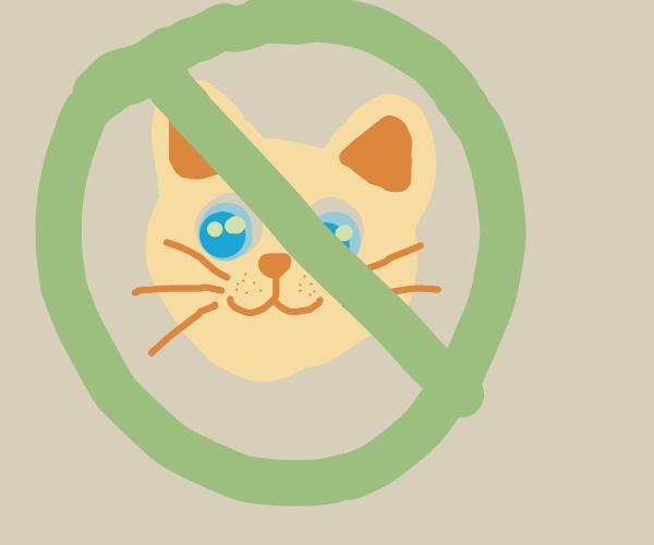 no cat pls