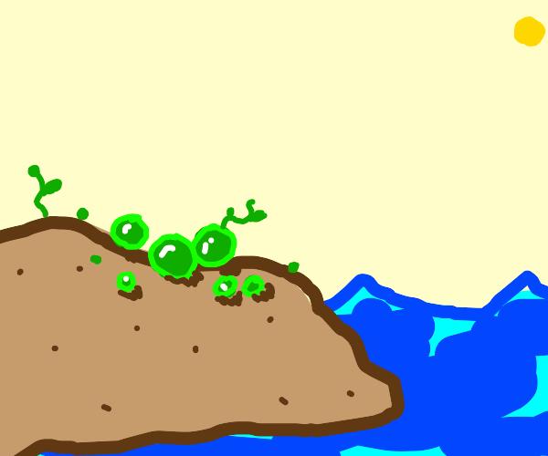 Peas on an Island