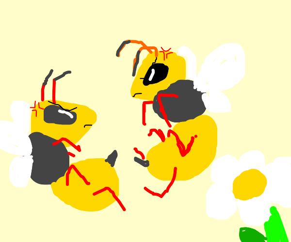 Hornet Fighting