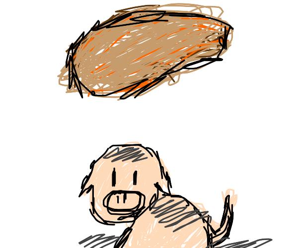 Pig under a chicken nugget