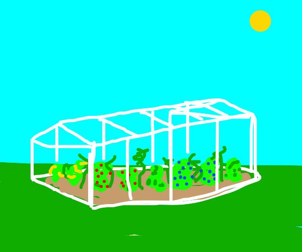 A garden in a greenhouse