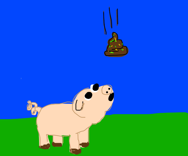 pig looks at turd about to fall on him