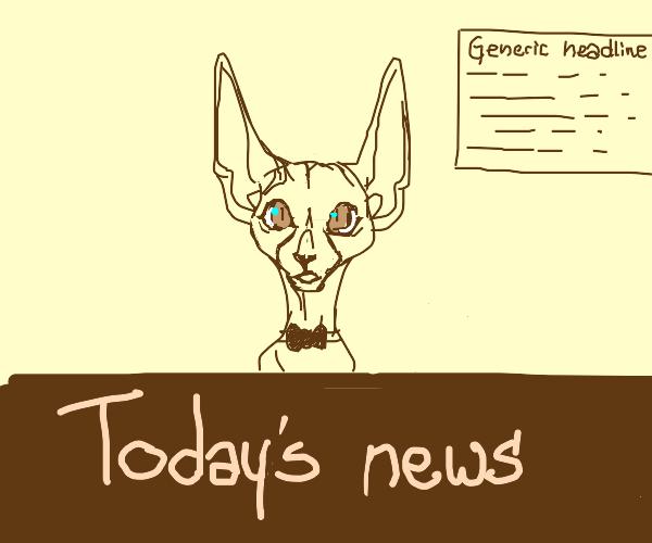 Sphynx News Anchor