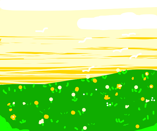 Golden flowers in a field
