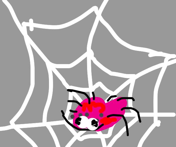 derpy pompom spider