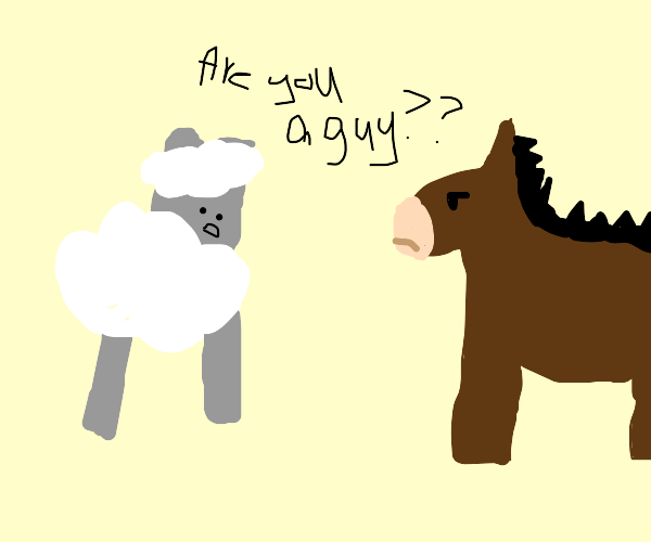 Sheep mistakes a horse for a guy.
