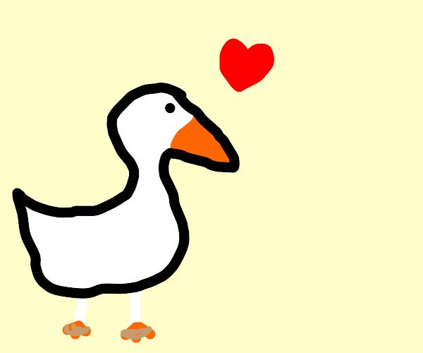 Goose wearing sandals is in love