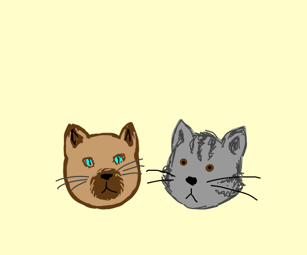 Two cat heads (not ugly at all)