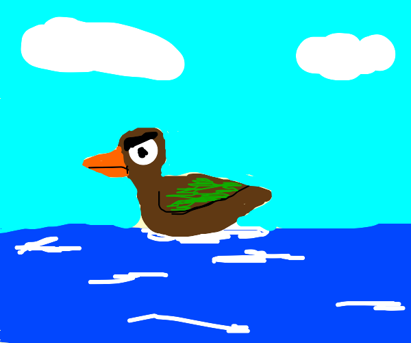 Angry duck in the ocean