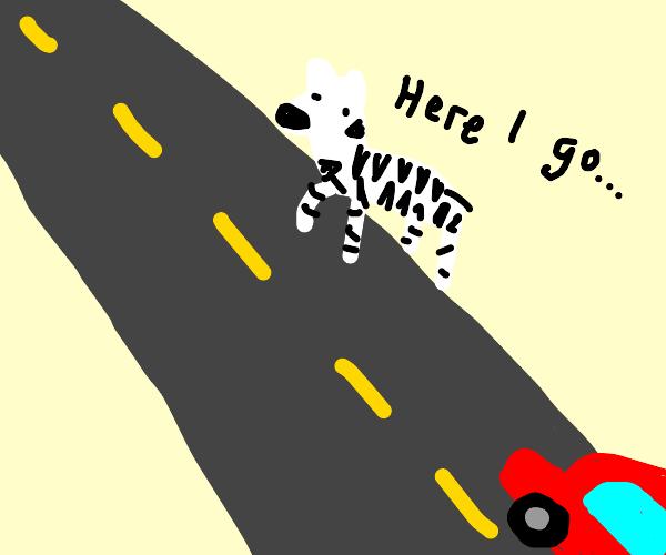 Zebra crossing the Highway