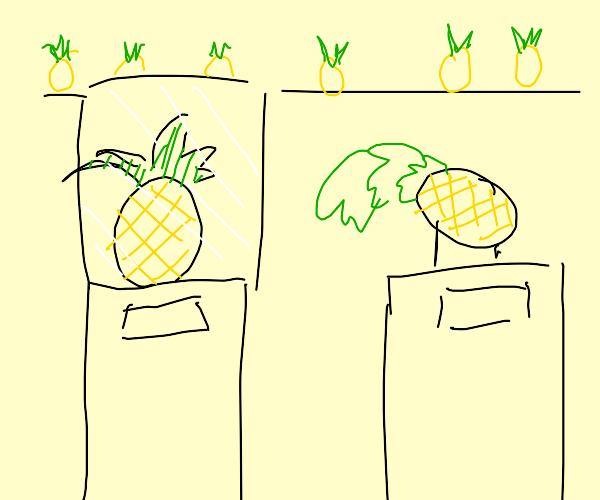 Pineapple Exhibit