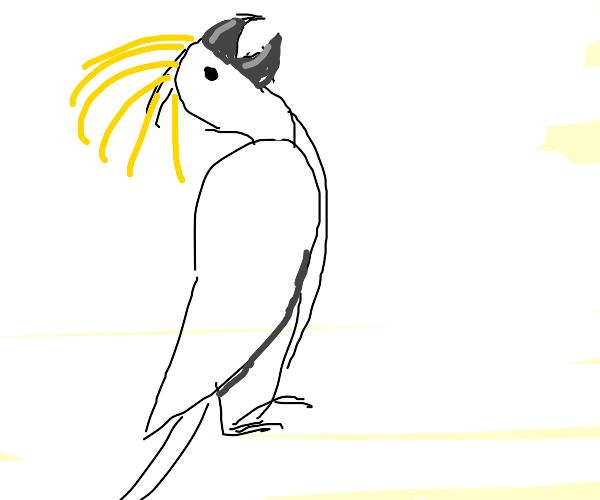 cockatoo is having a mental breakdown