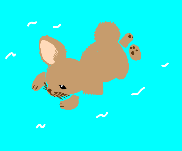 Bunny swimming on a pond