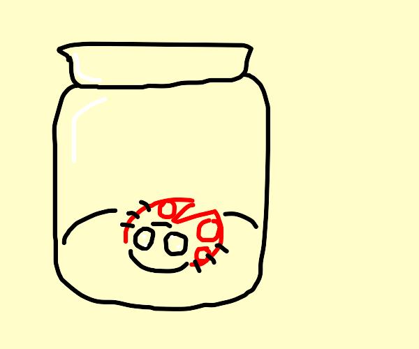 a bug in a jar