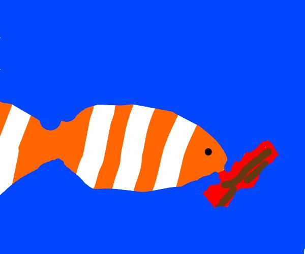 Nemo eating Bacon