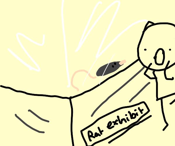 Rat Exhibit
