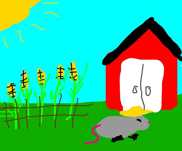 rat has a farm