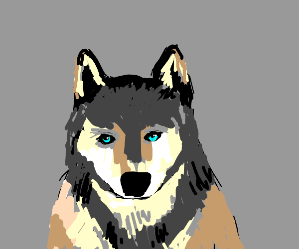 floofy wolf