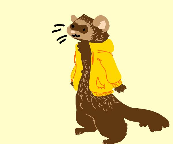Ferret wearing a Coat