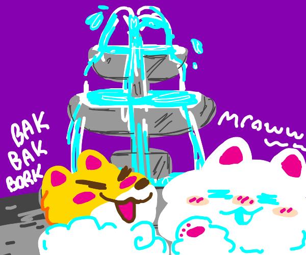 Cat and Dog near Fountain
