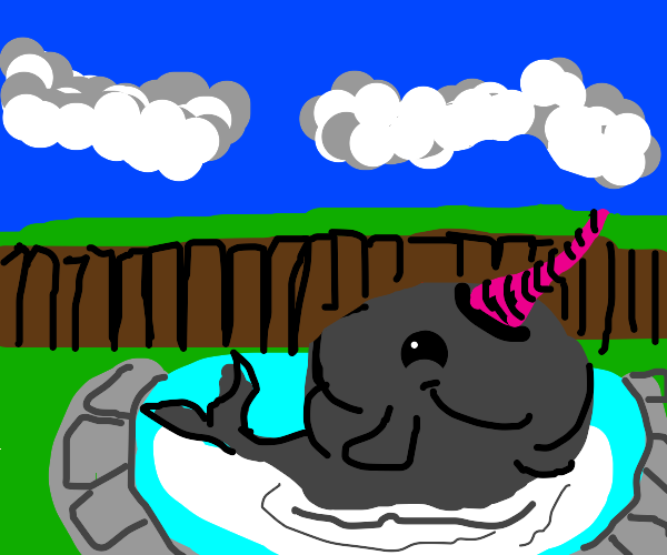 Narwhal in a private pool