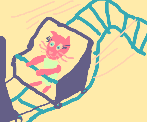 A cat in a Roller Coaster
