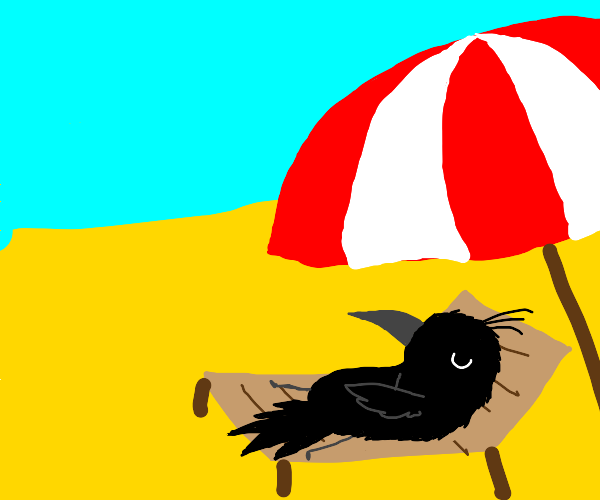 crow chilling on the beach