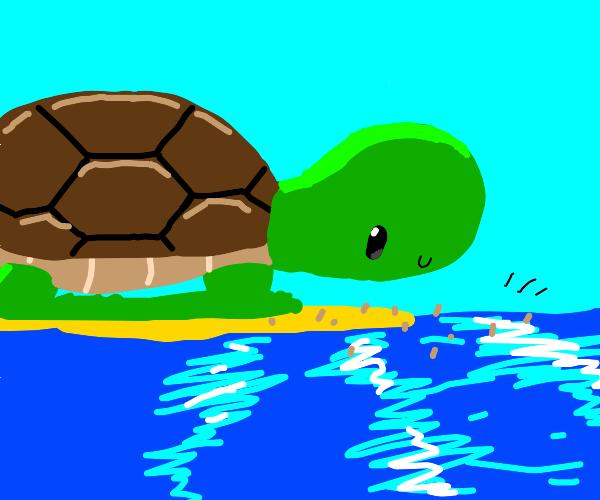 Giant turtle on beach