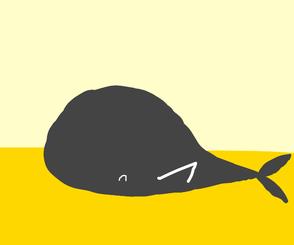 hippie whale