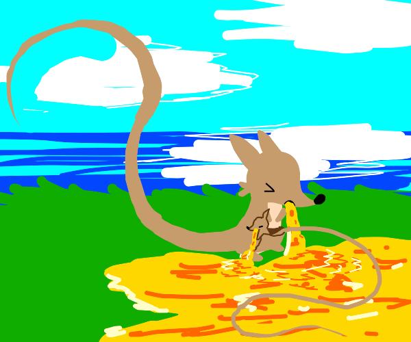 Kangaroo Vomiting