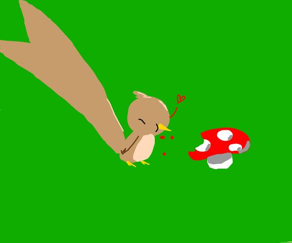 Bird Eats Mushroom