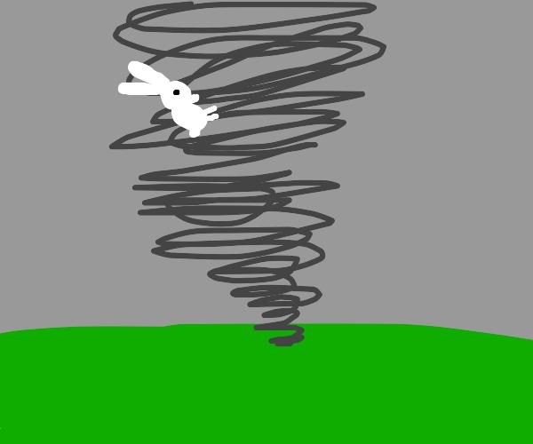 Bunny in tornado