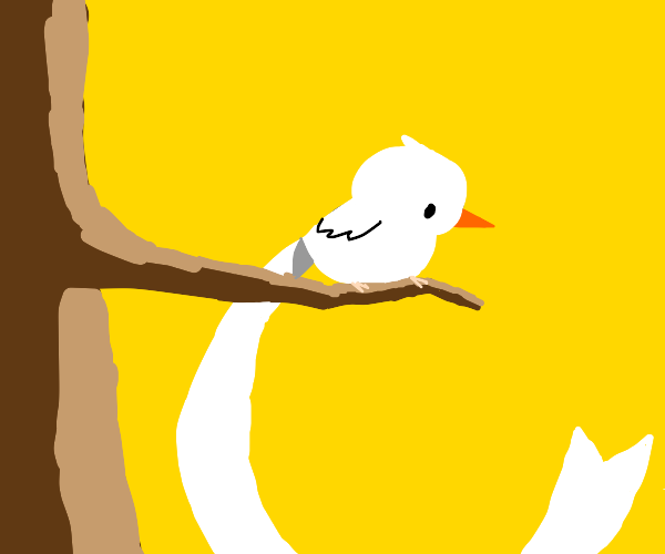 a bird looking down from a branch