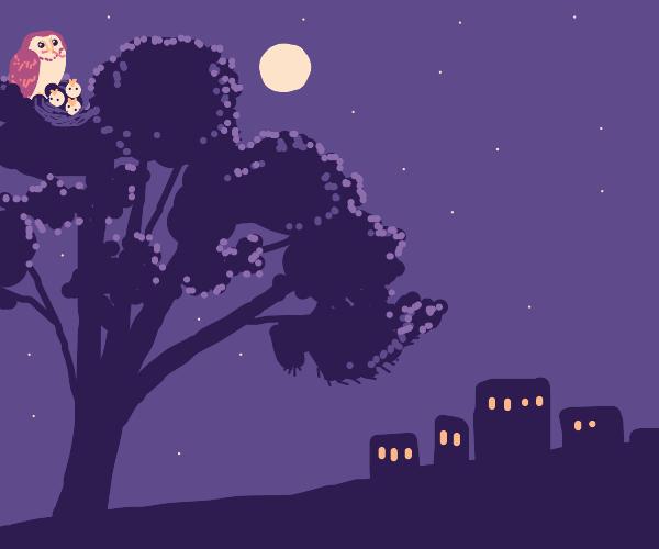 Barn owl feeding owlets atop a pine tree