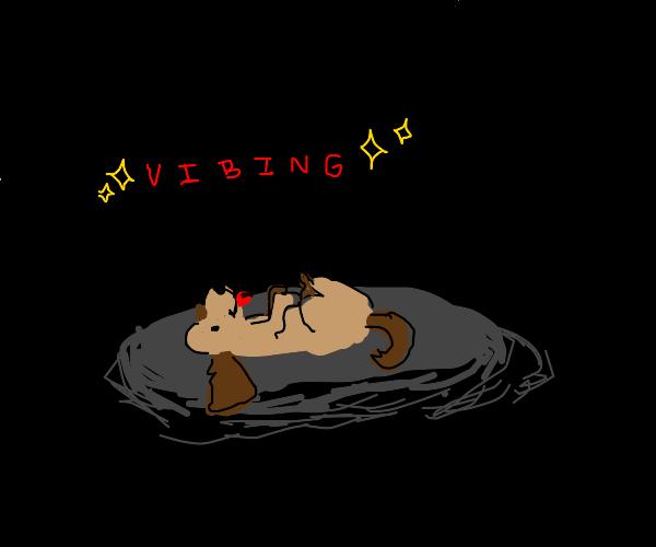 dog on floor simply vibing
