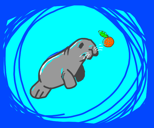 Manatee playing with an Orange