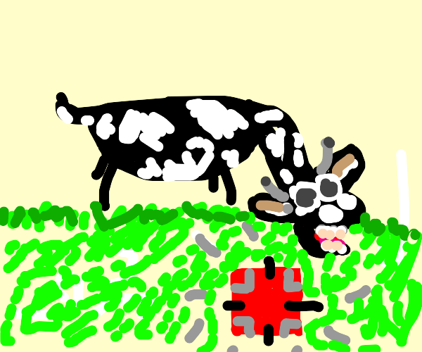 Cow discovering a Square