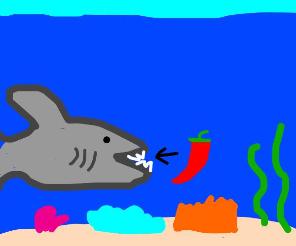 Shark eats chili pepper
