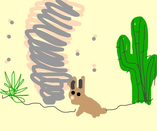 Bunny caught in dust tornado