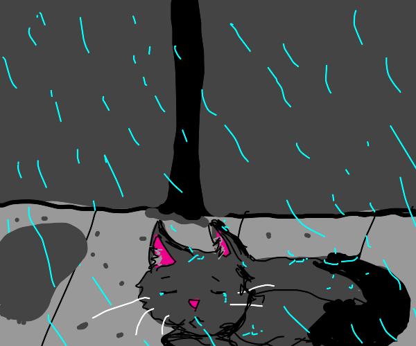 Sad grey cat