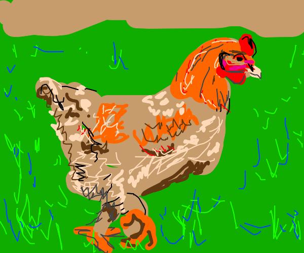 Orpington Chicken
