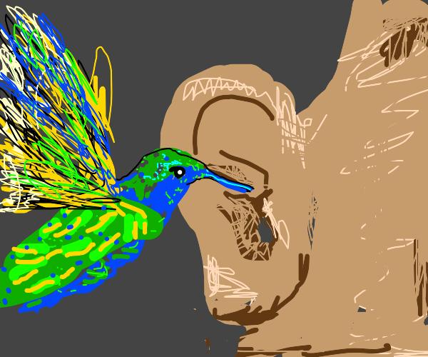 Humming bird pecks at an ear