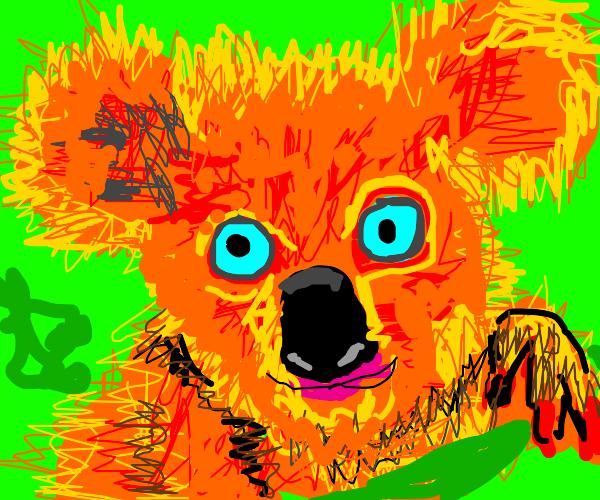 Orange koala