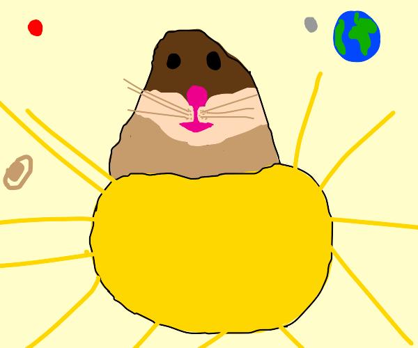 hamster on the sun